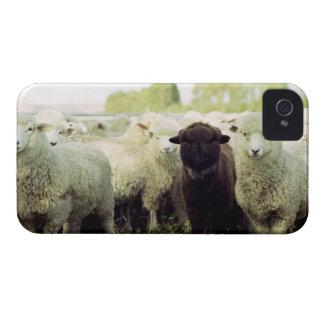 New Zealand iPhone 4 Case