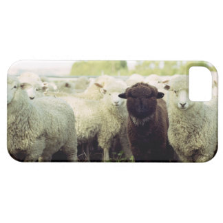 New Zealand iPhone 5 Cover