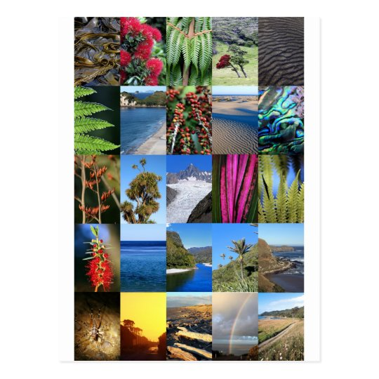 New Zealand Kiwiana nature scenes Postcard