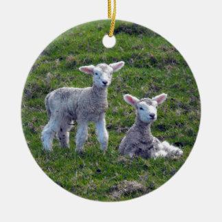 New Zealand Lambs Christmas Ornament