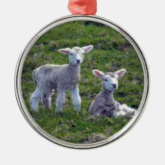 New Zealand Lambs Christmas Ornament