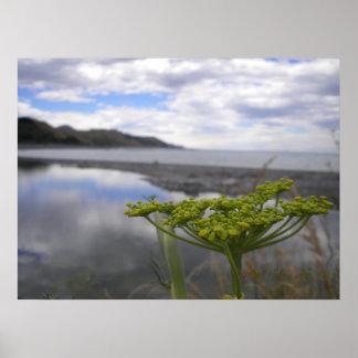 New Zealand landscape poster