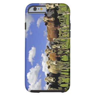 New Zealand, North Island, Auckland Tough iPhone 6 Case