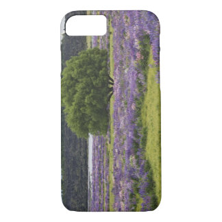 New Zealand, South Island. Blooming lupine and iPhone 8/7 Case