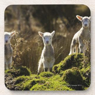 New Zealand, South Island, Fiordland National Coaster