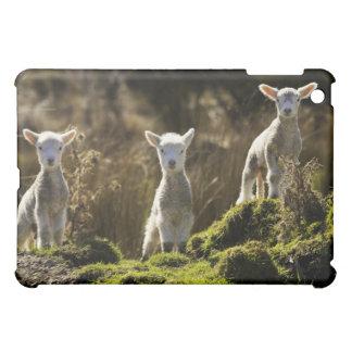 New Zealand, South Island, Fiordland National iPad Mini Covers