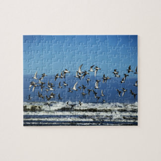 New Zealand, South Island, seagulls flying over Jigsaw Puzzle