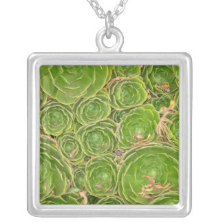 New Zealand, South Island. Succulent. Silver Plated Necklace