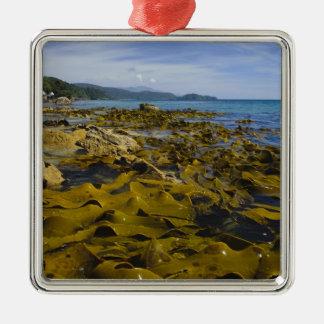 New Zealand, Southland, Stewart Island. Kelp Christmas Ornament