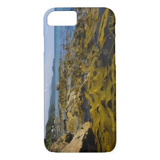 New Zealand, Southland, Stewart Island. Kelp iPhone 7 Case