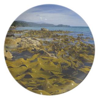 New Zealand, Southland, Stewart Island. Kelp Plate