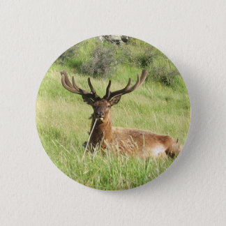 New Zealand Stags 6 Cm Round Badge