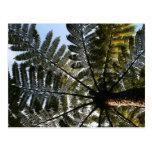 New Zealand Tree Fern Post Cards