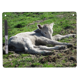 Newborn Calf Dry Erase White Board