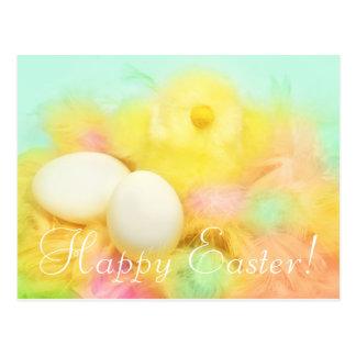 Newborn Chicken Easter Postcard