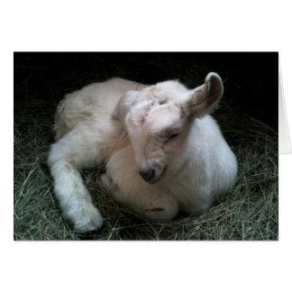 Newborn goat kid greeting card