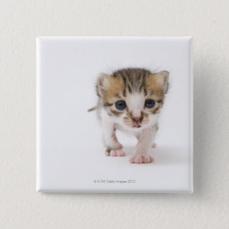 Newborn kitten 15 cm square badge