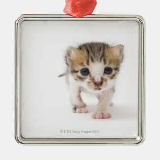 Newborn kitten christmas ornament