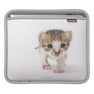 Newborn kitten iPad sleeve
