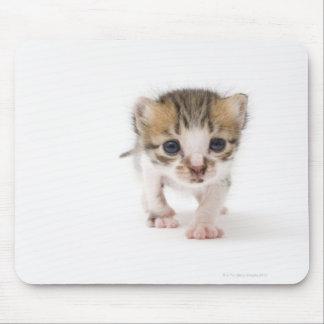Newborn kitten mouse pad