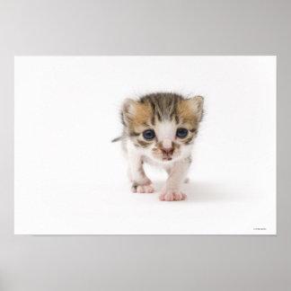 Newborn kitten poster