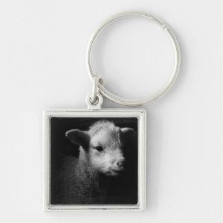 Newborn lamb in dramatic lighting. keychains