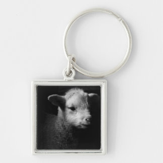Newborn lamb in dramatic lighting. Silver-Colored square key ring