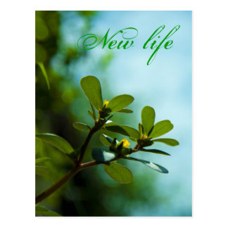 Newf life - postcards