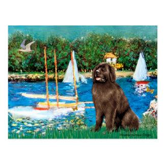 Newfie (brown) - Sailboats Postcard
