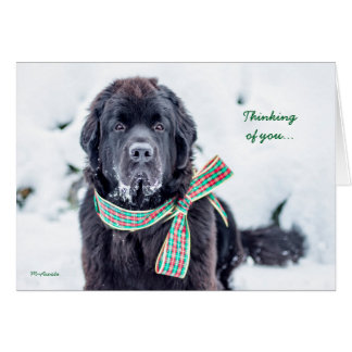 Newfie Holiday Wishes for You Card