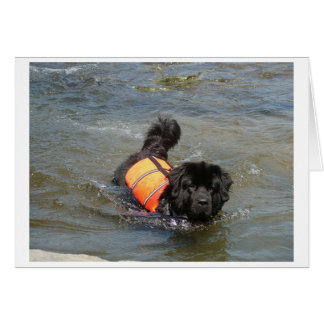 newfie in water.png card