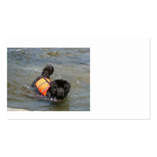 newfie in water.png pack of standard business cards