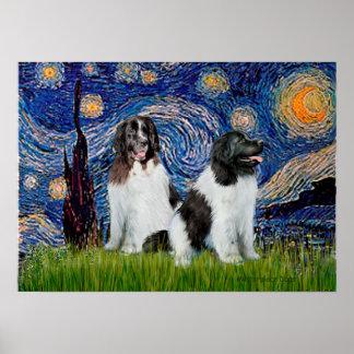 Newfie Landseer Pair - Starry Night Poster
