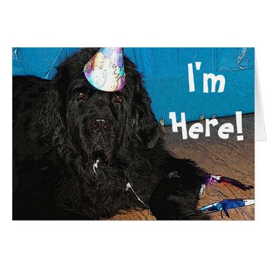 Newfoundland dog Birthday Card