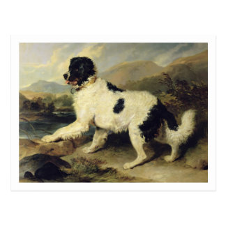 Newfoundland Dog Called Lion, 1824 (oil on canvas) Postcard
