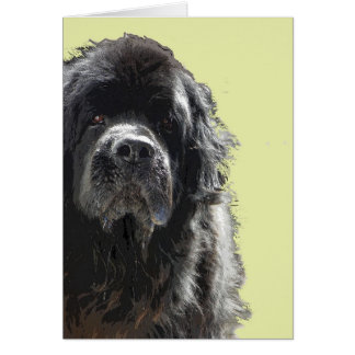Newfoundland dog Card