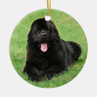 Newfoundland dog christmas ornament