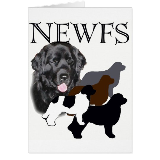 Newfoundland dog four colours card