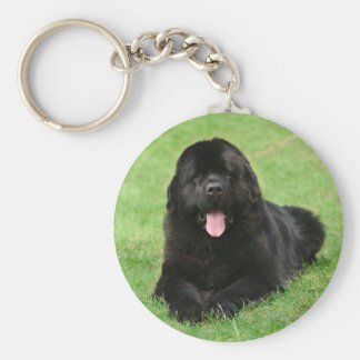 Newfoundland dog key ring