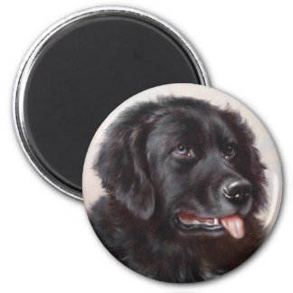 Newfoundland Dog Portrait Magnet