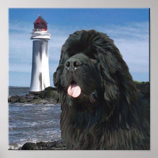 Newfoundland Dog Portrait Poster