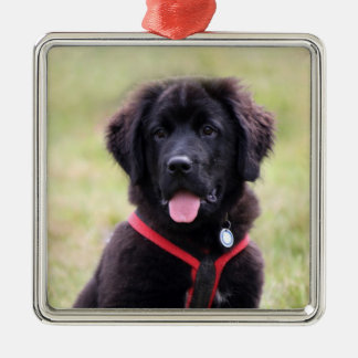 Newfoundland dog puppy cute beautiful photo, gift christmas ornament
