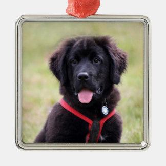 Newfoundland dog puppy cute beautiful photo, gift christmas ornament