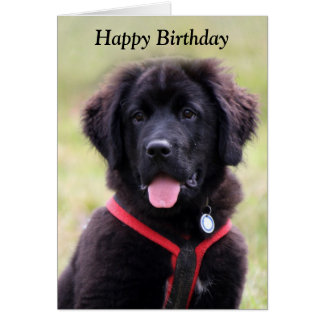 Newfoundland dog puppy cute photo birthday card
