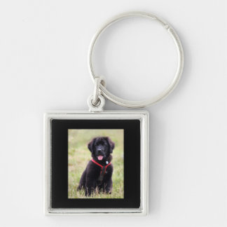Newfoundland dog puppy cute photo, gift Silver-Colored square key ring