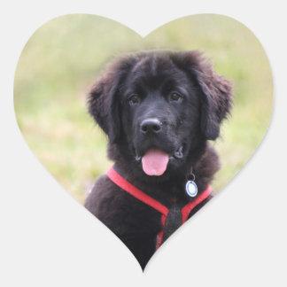 Newfoundland dog puppy cute photo, gift heart stickers