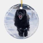 Newfoundland Dog Running Ornament