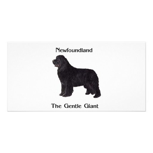 Newfoundland Dog The Gentle Giant Photo Cards