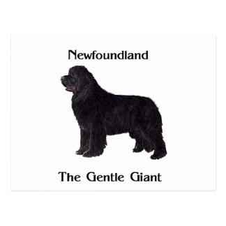 Newfoundland Dog The Gentle Giant Postcard