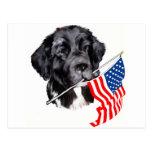 Newfoundland Dog with Flag Post Cards